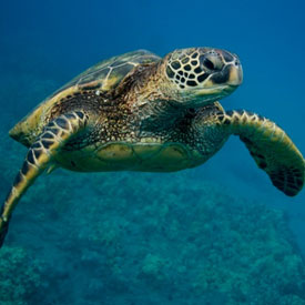LOGGER OR GREEN? MARINE TURTLE AWARENESS